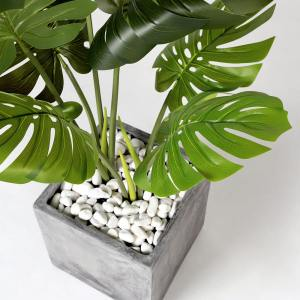 Tree - Monstera H900